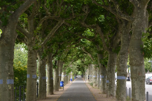 Urban Areas Can't Get Enough Trees – for new trees planted, others are removed