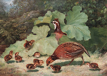 Tait - Quail and Young