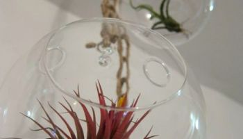 Tutorial air plant chandelier red handled scissors sunday snapshot crocheted air plant chandelier aloadofball Image collections
