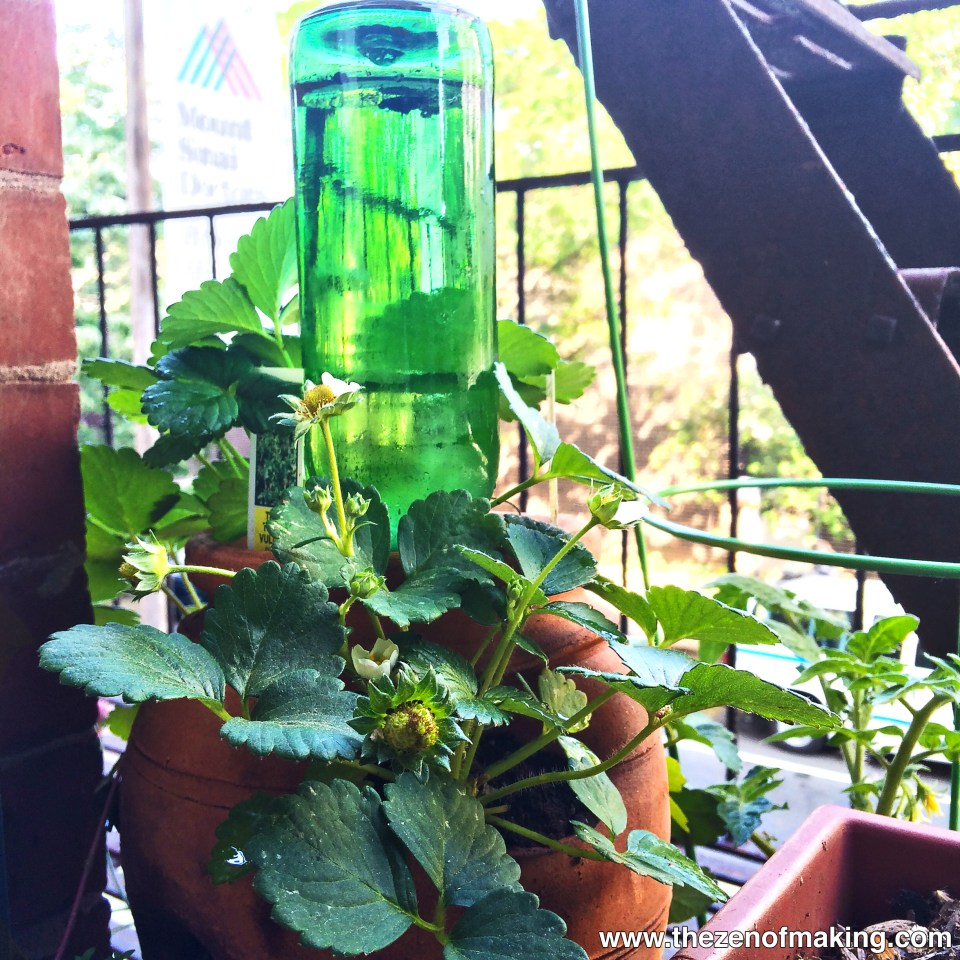 Tutorial: Beer Bottle Watering Globe for Houseplants and Container Gardens | Red-Handled Scissors