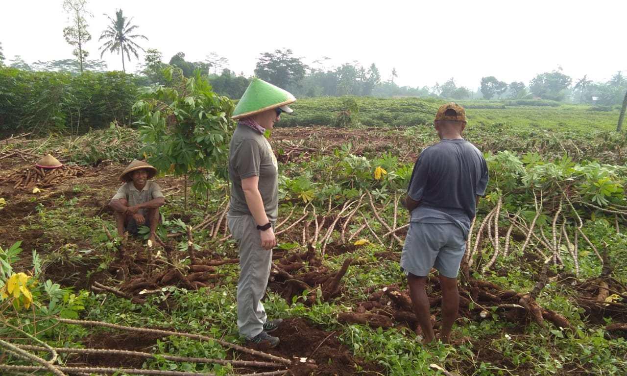 belajar pertanian singkong bersama pak tarso