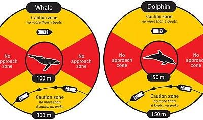 QBRC Update – Whale Season