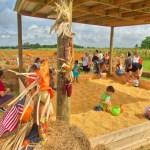 Burrs Berry Farm - Corn Pit