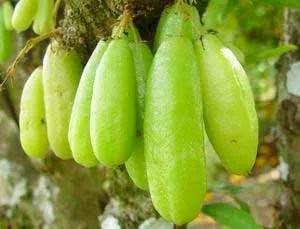 Bilimbi tropical fruit