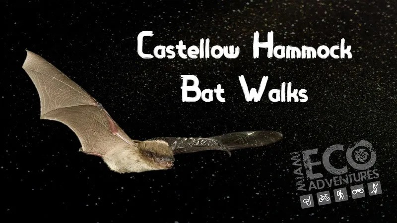 Bat Walk at Castellow Hammock Park