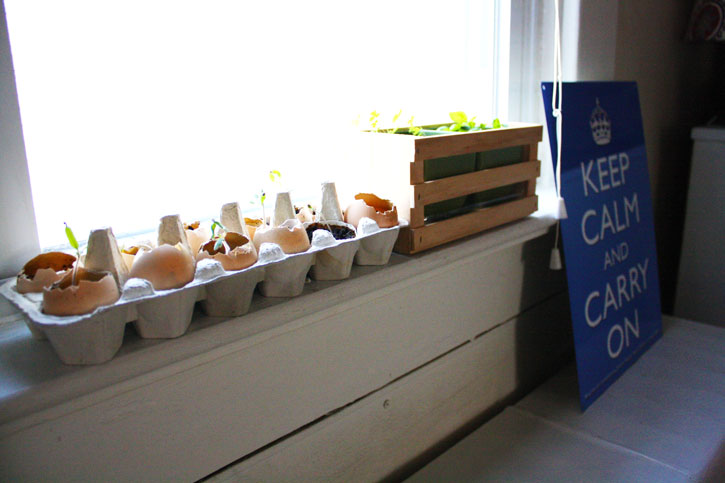 Skip the Seed Tray! This is How to Start Seeds in the Most Frugal Way | redleafstyle.com