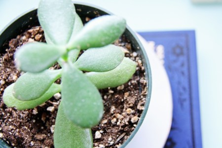 5 Best Houseplants For Your Home   redleafstyle.com