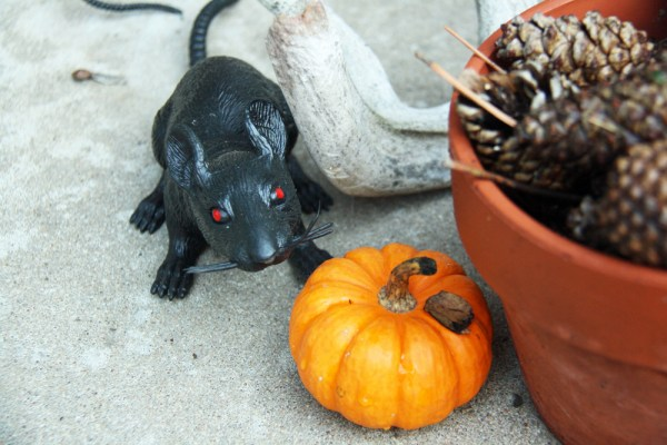 Last-Minute Halloween Decorations | redleafstyle.com