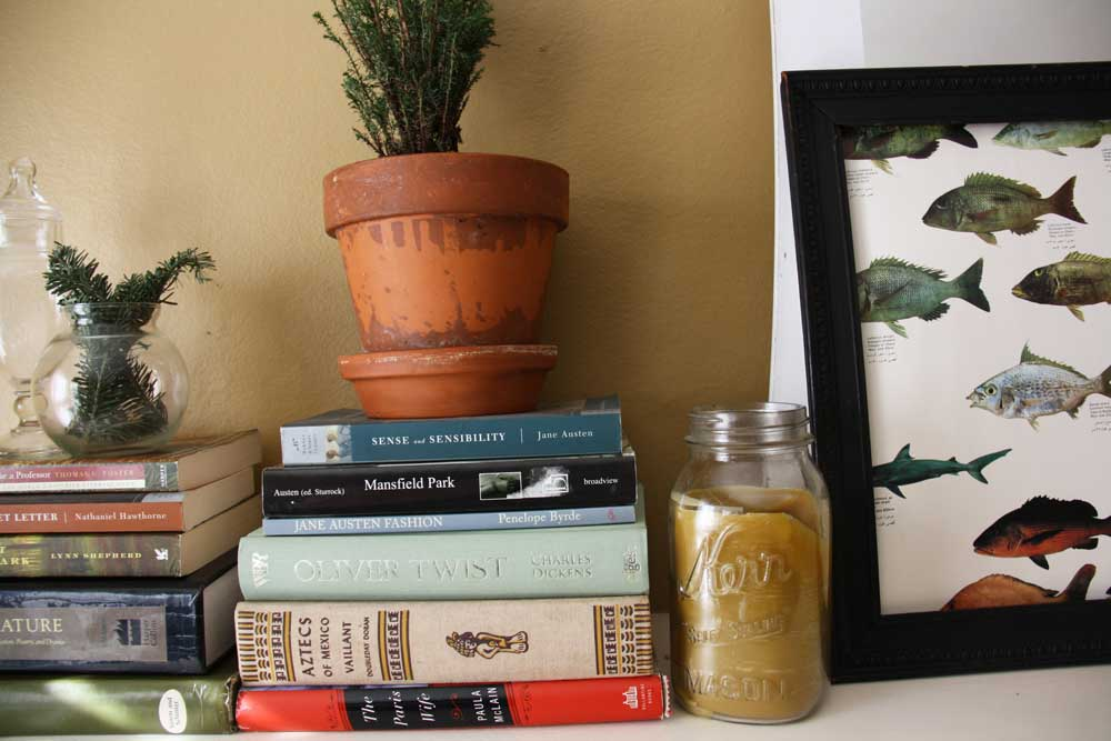 Cypress plant | redleafstyle.com