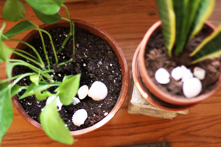 Add flair to houseplants with seashells