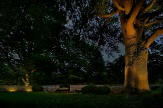 IIluminated walls and trees