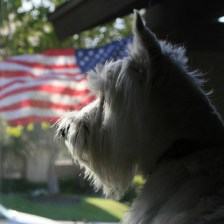 Keeping Your Dog Calm on July 4th