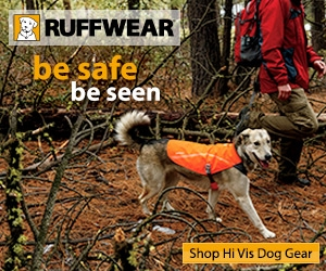 High Visibility Dog Gear