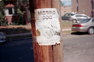 How To Find Your Lost Dog
