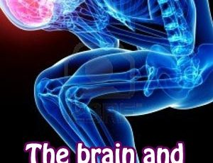 The brain and nervous system in fibromyalgia