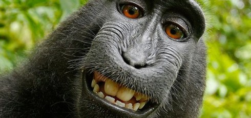 US Officials Rule That Monkey Selfies Cannot Be Copyrighted
