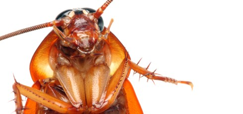 Creepy Cockroaches Could Be Search And Rescue Heroes