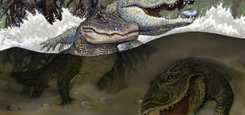 Seven ancient crocodilian species discovered in Amazon