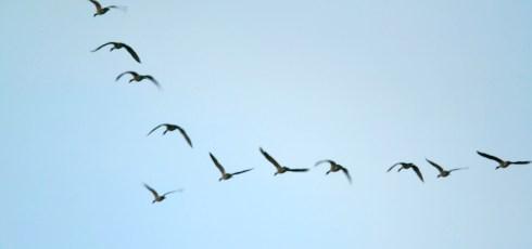 Solar thermal power plant vaporizes birds