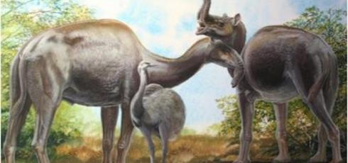 Mystery of 'strange' South American mammals solved