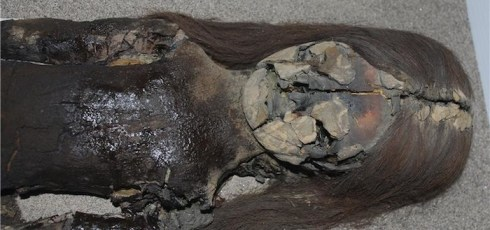 Something is eating 7,000-year-old mummies