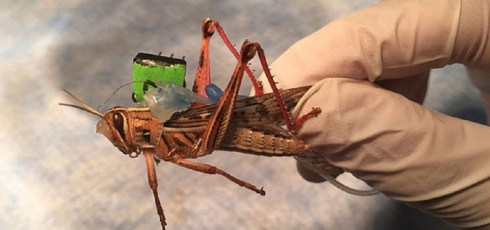 The US Navy is Spending $750k on Bomb-Sniffing Robot Locusts