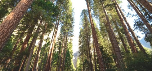 Climate change causing US trees to 'migrate'