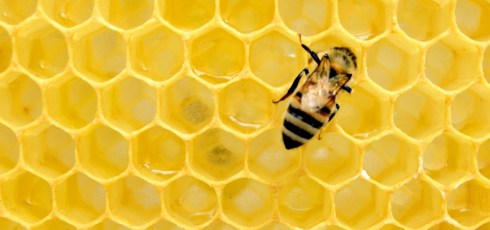 Does Honey Work as a Face Wash For Acne?