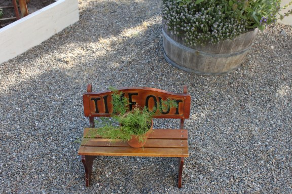 Bench with Asparagus fern