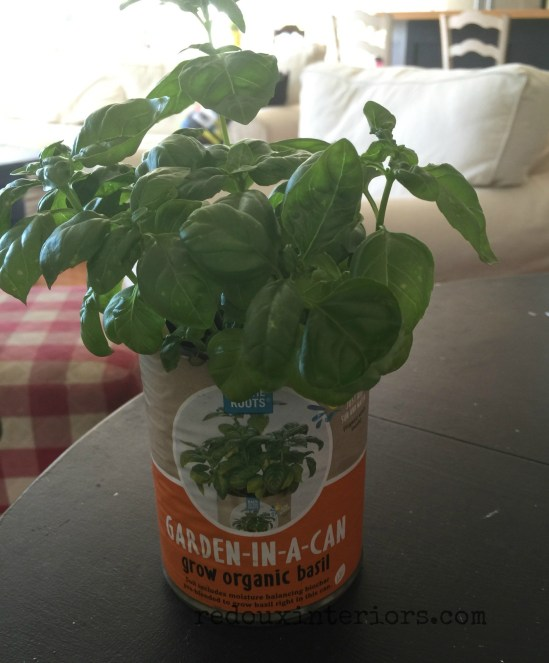 basil in a can redouxinteriors