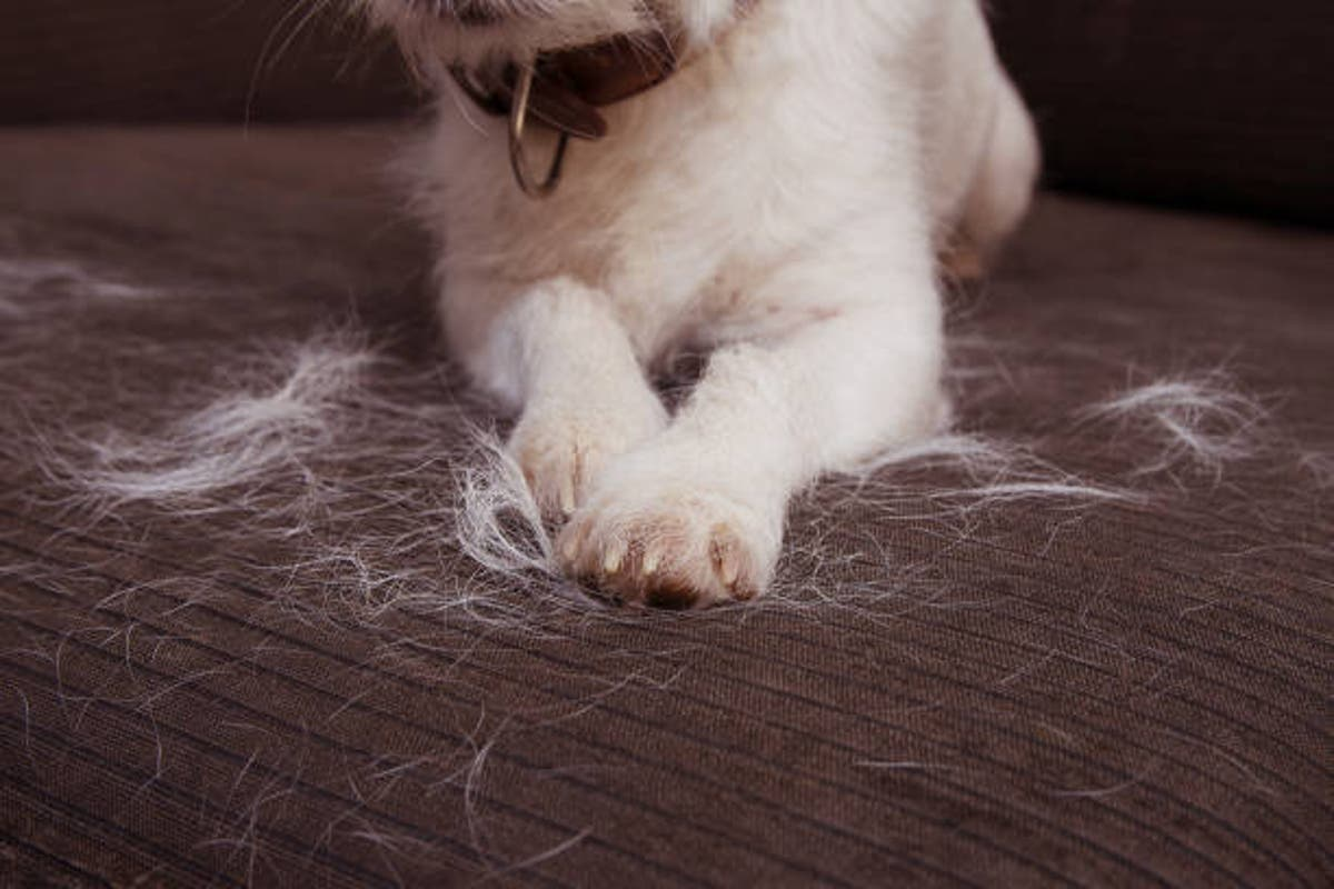 3 Tricks That Make Animal Hair A Thing Of The Past