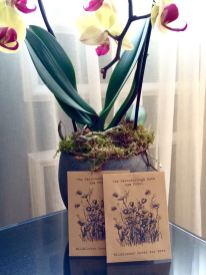 ... Wildblumen-Samen zum Mitnehmen ...
