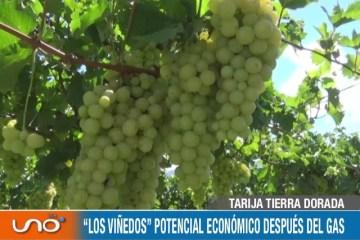 """TARIJA TIERRA DORADA: """"LOS VIÑEDOS"""" POTENCIAL ECONÓMICO DESPUÉS DEL GAS"""