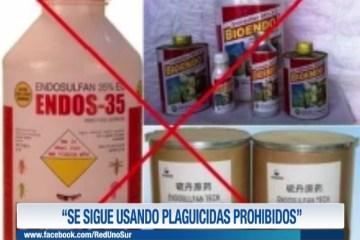 """""""SE SIGUE USANDO PLAGUICIDAS PROHIBIDOS"""""""