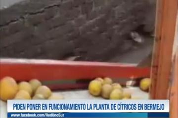 PIDEN PONER EN FUNCIONAMIENTO LA PLANTA DE CÍTRICOS EN BERMEJO