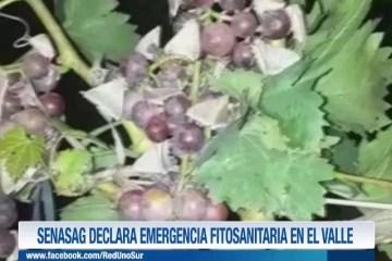 SENASAG DECLARA EMERGENCIA FITOSANITARIA EN EL VALLE