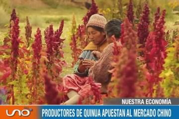 NUESTRA ECONOMÍA: PRODUCTORES DE QUINUA APUESTAN AL MERCADO CHINO
