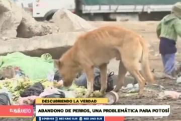 DESCUBRIENDO LA VERDAD: ABANDONO DE UN ANIMAL DE COMPAÑÍA