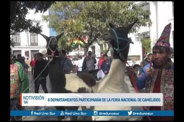 6 DEPARTAMENTOS PARTICIPARÁN DE LA FERIA NACIONAL DE CAMÉLIDOS