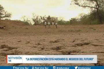"""""""LA DEFORESTACIÓN ESTÁ MATANDO EL NEGOCIO DEL FUTURO"""""""