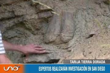 TARIJA TIERRA DORADA: PIDEN PRESERVAR EL PATRIMONIO PALEONTOLÓGICO