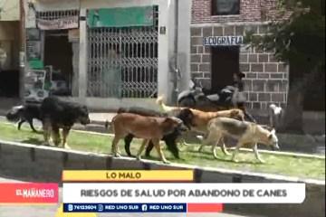 POSIBLES RIESGOS A LA SALUD POR EL ABANDONO DE CANES