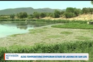 LAS ALTAS TEMPERATURAS EMPEORAN EL ESTADO DE LAS LAGUNAS DE SAN LUIS