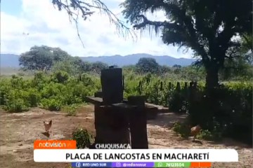 PEDIRÁN FUMIGACIÓN AÉREA CONTRA PLAGA DE LANGOSTAS EN MACHARETÍ