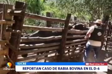 REPORTAN CASO DE RABIA BOVINA EN EL DISTRITO 6