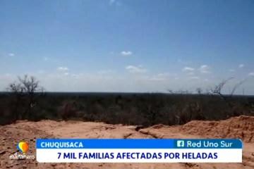 7 MIL FAMILIAS AFECTADAS POR LAS HELADAS