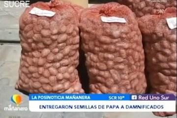 POSINOTICIA: ENTREGARON SEMILLAS DE PAPA A DAMINIFICADOS