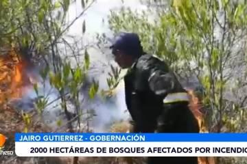 2000 HECTÁREAS DE BOSQUES AFECTADOS POR INCENDIOS