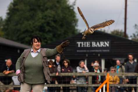 Out on a Wing Falconry at Falconry & Countryside Show, Stonham Barns, Suffolk