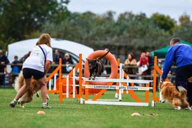 Lowestoft Dog Agility display at the Falconry & Countryside Show, Stonham Barns, Suffolk